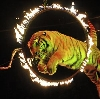Цирки в Сысерти